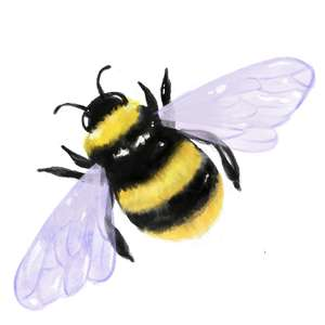 bumble bee watercolor