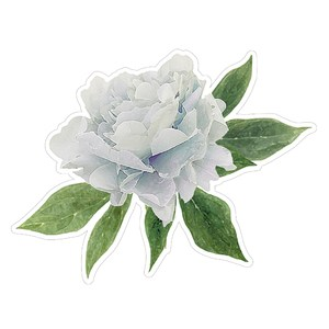 floral digital illustration classic blue peony