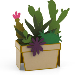 succulent box card