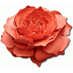 3d catalina tea rose