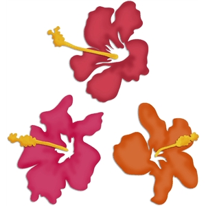 Hawaiian hibiscus flowers