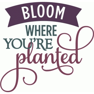 bloom where you're planted - layered phrase