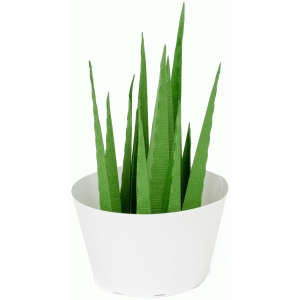3d spiky house plant