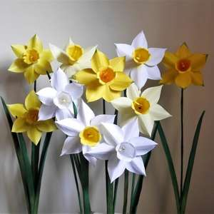 narcissus fortune