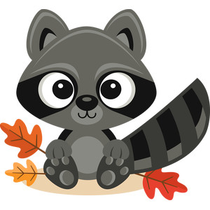 fall raccoon