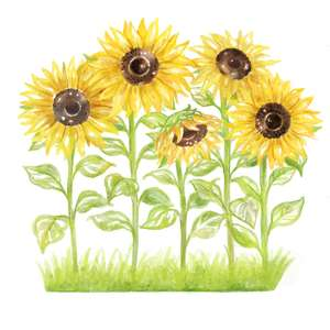 sunflower garden watercolor