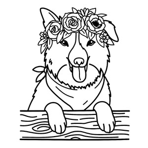 border collie with flower crown