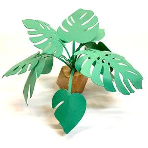 miniature monstera plant