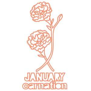 january carnation flower