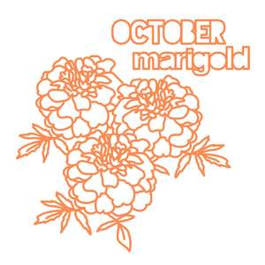 october flower marigold