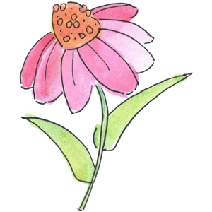 watercolor coneflower