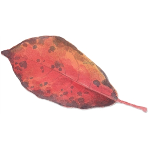 red leaf watercolor