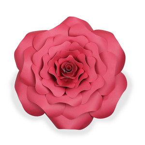rose flower - big