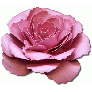 3d dublin tea rose
