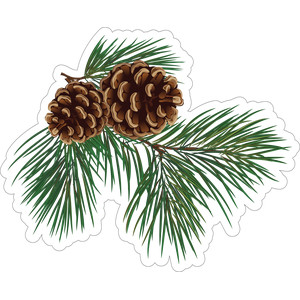 pine and pine cones
