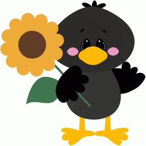 crow holding sunflower fall