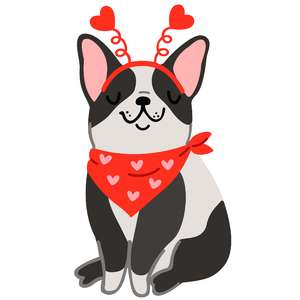 valentine's boston terrier with hearts headband