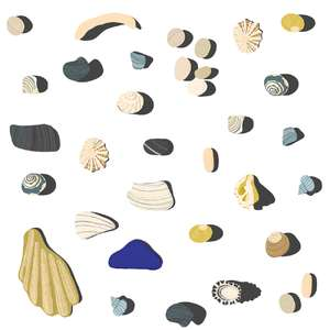beachcombing shell stickers