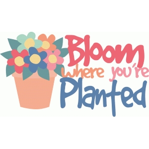 bloom where you're planted