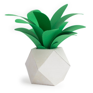 geometric pot and plant