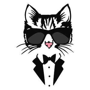 kitty in tux with shades