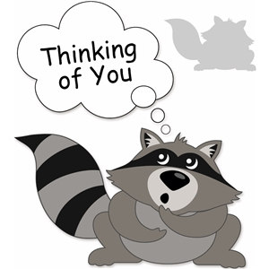 raccoon thinking