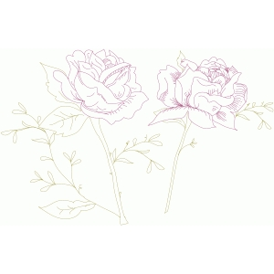 sketched roses