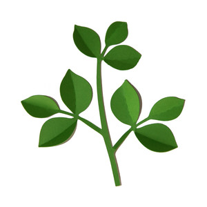 3d large leaf vine