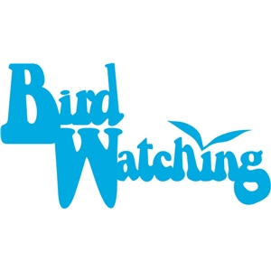 bird watching phrase