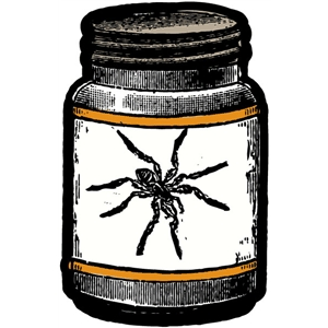 echo park spider in a jar