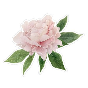 floral digital illustration classic peony