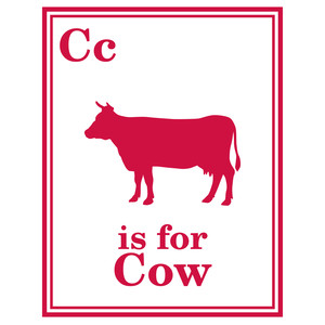 cow flashcard