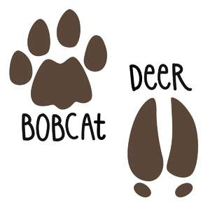 bobcat and deer prints