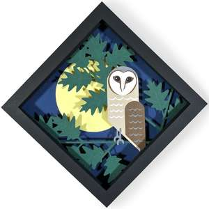 barn owl shadow box