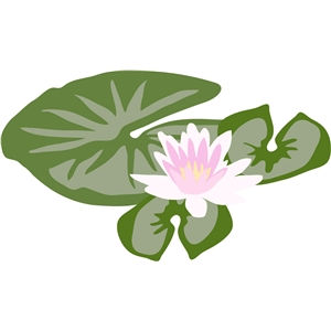 lily pad and lotus