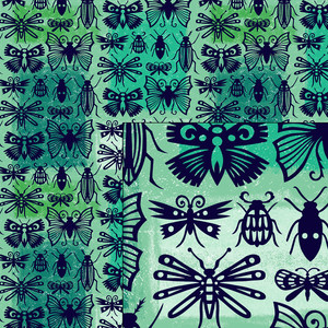 insect collection pattern