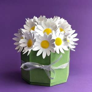 dome box with daisies