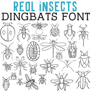 cg real insects dingbats
