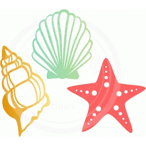 shells and a star