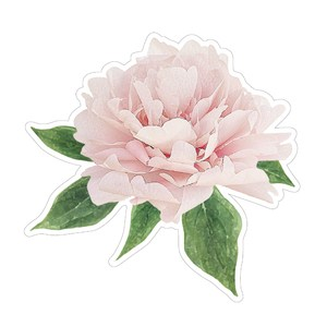 floral illustration peony with leaves