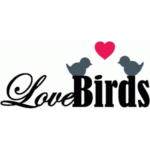 love birds title / phrase