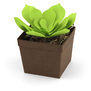 succulent and square pot