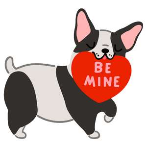 boston terrier be mine valentine heart