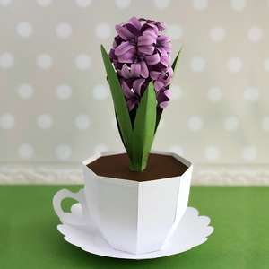 3d hyacinth in a cup box