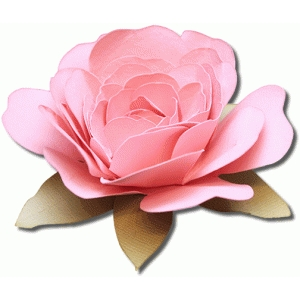 3d queen anne rose flower