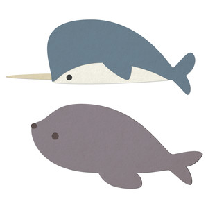 narwhal & seal