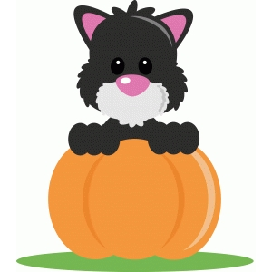 ppbn black cat in a pumpkin