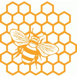 honeycomb bee
