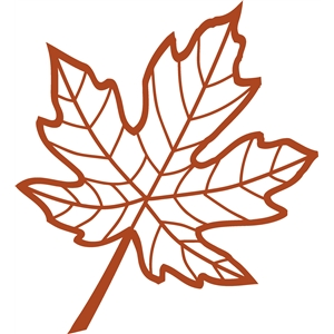veined maple leaf