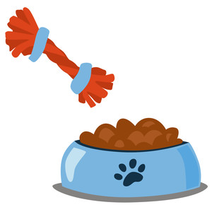 dog food and toy